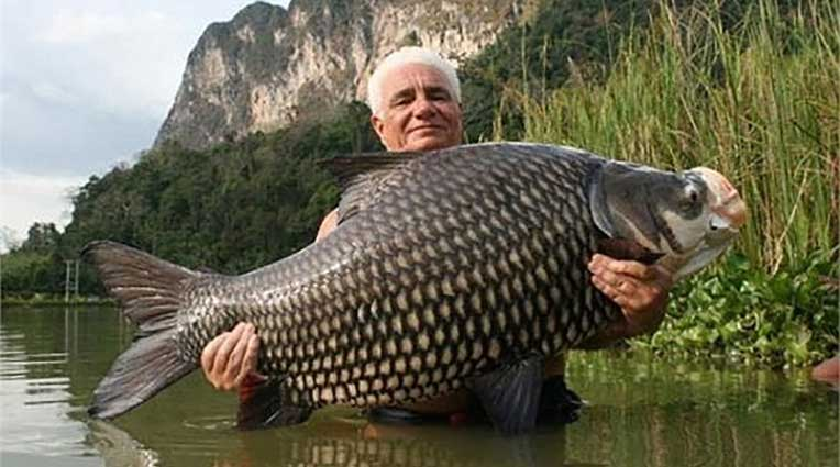 mơ thấy cá chép hóa rồng